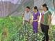 Phát huy vai trò bà đỡ cho nông dân