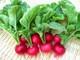 4 thực phẩm quanh ta có công dụng như nhân sâm