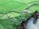 Bức tranh mướt xanh của lúa thì con gái ở miền Tây xứ Nghệ