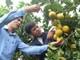 Để nông nghiệp tỉnh nhà vượt qua thách thức hội nhập