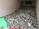 13 tấn cá nóc hôi thối từ Nghệ An vào Quảng Bình tiêu thụ