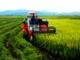 Diễn Châu: Hơn 100 máy gặt đập liên hợp thu hoạch lúa hè thu