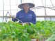 Hướng đi cho nông nghiệp Nghệ An từ các mô hình ở Lâm Đồng