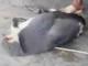 Truy tìm thanh niên người Nghệ giết voọc rồi phát trực tiếp trên Facebook