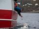 """Nga điều đội quân cá voi """"đánh chặn"""" tàu đến từ NATO?"""