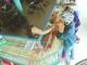 Cảnh sát giao thông lội ruộng khống chế tên cướp tiệm vàng