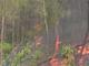 Nghệ An: Cụ ông thiệt mạng khi ngăn cháy rừng