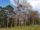 Bắt 5 người 'đầu độc' rừng thông bằng thuốc diệt cỏ