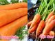 Cách phân biệt rau, củ quả Việt Nam với hàng Trung Quốc dịp Tết