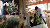 Bỏ việc lương cao, kỹ sư Nghệ An về quê nuôi gà bằng... tảo xoắn, dế, thảo dược