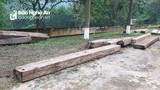 Phát hiện 4,32 m3 gỗ vô chủ ở trong rừng