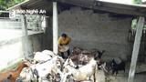 Nhiều mô hình giáo dân làm kinh tế giỏi ở Anh Sơn