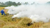 Nông dân Nghệ An đốt rơm rạ trên đồng: Vừa lãng phí vừa gây ô nhiễm