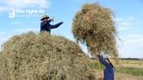 Cận cảnh nông dân Nghệ An 'vật lộn' với rơm, rạ trong nắng nóng