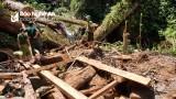 Nghệ An: 25 cây săng vì vùng rừng biên giới bị khai thác trái phép