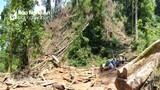 Nghệ An: Khởi tố vụ án hình sự khai thác 25 cây săng vì trong vùng biên giới trái phép