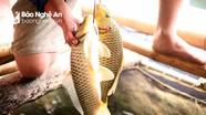 Nông dân miền núi thu gần 100 triệu đồng/năm từ nuôi cá lồng
