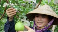 Chú trọng nâng cao chất lượng mô hình khuyến nông