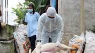 6 xã của huyện Diễn Châu có lợn ốm chết đột ngột