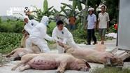Huyện Đô Lương công bố dịch tả lợn châu Phi