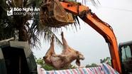 Địa phương thứ 5 ở Nghệ An xuất hiện dịch tả lợn châu Phi