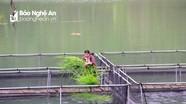 Nghệ An: 7 tháng đầu năm sản lượng nuôi trồng thủy sản tăng gần 10.400 tấn