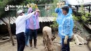 Dịch tả lợn châu Phi lây lan phức tạp ở Nam Đàn và TP Vinh