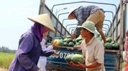 Nghệ An: Dưa hấu 'cháy hàng', nông dân ngập niềm vui được mùa được giá