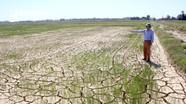 Nghệ An: Hạn hán khốc liệt, đồng ruộng nứt toác