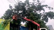 TP.Vinh cắt tỉa gần 3.000 cây xanh ứng phó với bão số 7