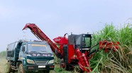 Công ty CP Mía đường Sông Con cơ giới hóa từ trồng đến thu hoạch mía