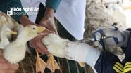 Gà chết vứt ở ven biển Nghệ An dương tính với virus cúm H5N6 nguy hiểm, có thể lây sang người