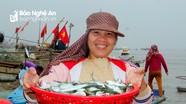 Ngư dân Nghệ An trúng đậm cá trích