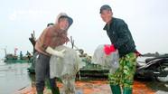 Ngư dân Nghệ An vào mùa đánh bắt sứa