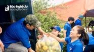 Tỉnh đoàn Nghệ An giải cứu hàng tấn quýt PQ cho người dân Nghĩa Đàn