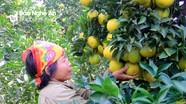 Nghệ An: Hơn 180.000 hộ nông dân sản xuất kinh doanh giỏi
