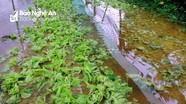 Vựa rau lớn nhất TP. Vinh ngập nặng sau mưa lớn