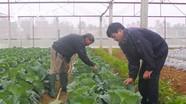 Sản xuất nông nghiệp ở Nghệ An đạt bình quân 80 triệu đồng/ha