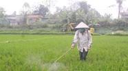 Nghệ An: Trên 722 ha lúa xuân bị bệnh đạo ôn gây hại