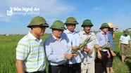Nghệ An phấn đấu gieo trồng 107.000 ha cây lương thực trong vụ xuân 2019