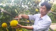 Thủ tướng Nguyễn Xuân Phúc: Tăng cường sản xuất nông nghiệp sạch