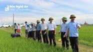 Nghệ An dự kiến gieo cấy 95.000 ha lúa hè thu - mùa