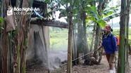 Thành phố Vinh xuất hiện ổ dịch tả lợn châu Phi đầu tiên