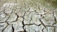 Nắng hạn khốc liệt, gần 2.000 ha lúa ở Nghệ An chết cháy