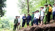 Lãnh đạo tỉnh kiểm tra tình hình sạt lở núi tại Con Cuông và Đô Lương