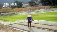 Nông nghiệp Nghệ An lên phương án ứng phó kịp thời khi rét đậm, rét hại kéo dài