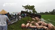 Xe tải đâm nhau, lợn chạy tán loạn trên đường tránh Vinh