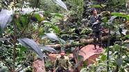 Bắt giữ 2 đối tượng người Lào đốn hạ sa mu