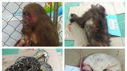 Người phụ nữ cất giấu 60 kg động vật hoang dã quý hiếm trong nhà