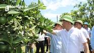 Đưa du lịch, nông nghiệp trở thành mũi nhọn, thế mạnh phát triển kinh tế ở Quỳ Châu